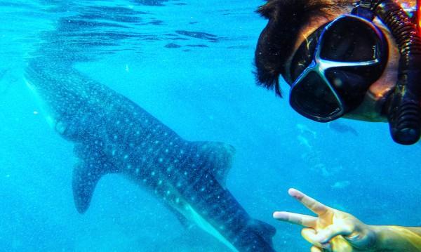 Девственият риф, в който плуваш с акулите