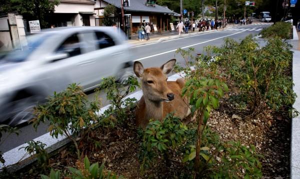 Срещу инцидентите с животни: Влак в Япония лае!