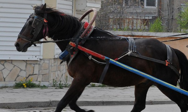 Бясно каране, кон на платното и четирима ранени