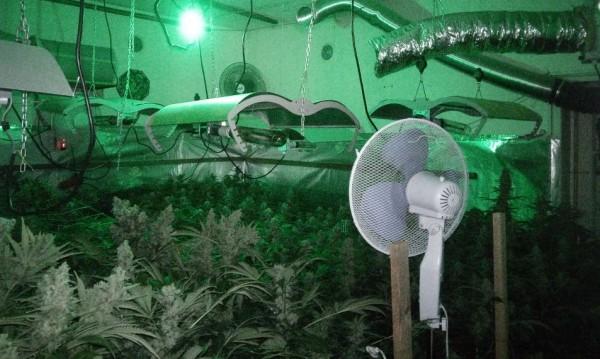 МВР разкри наркооранжерия в шуменски квартал