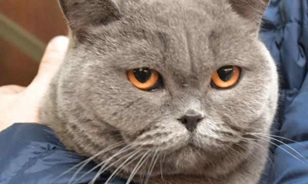 Ветеринарна клиника търси: Гушкач на котки с нежни ръце