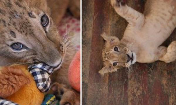 Даряват Терез и Максуд на... зоопарка в Пазарджик