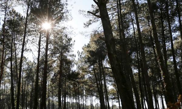 Слънчева и безветрена събота, температурите до 8°