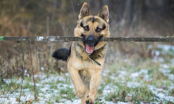 Разследват смъртта на две кучета в лесопарк край Русе