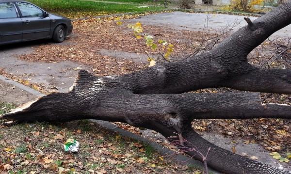 Ураганен вятър изкорени дървета и нанесе щети във Враца