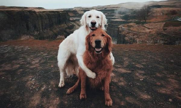 Любов от пръв поглед: Има ли такова животно?