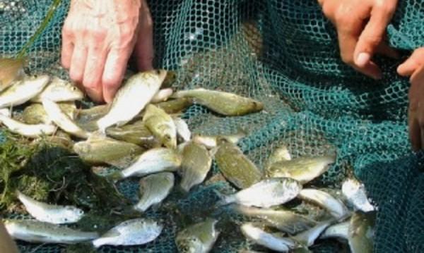 Подаден е сигнал за мъртва риба в река Тополница