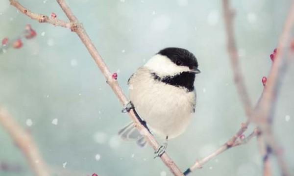 Понеделникът: Облачен, тих, без валежи от сняг!