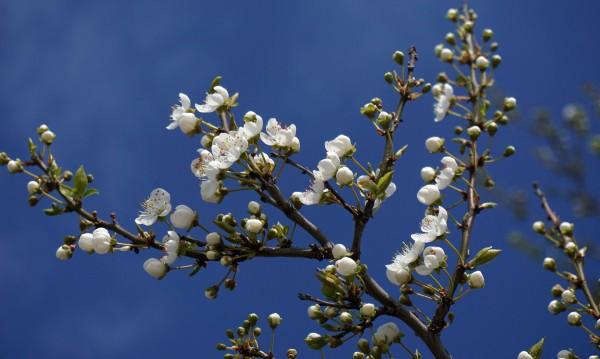 Пролетно: Слънчево, топло и тихо време в неделя