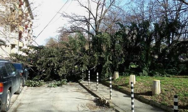 """Силният вятър събори дървета в парка """"Заимов"""", в Борисовата..."""