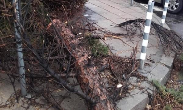 Шест села в Ловешко без ток заради вятъра
