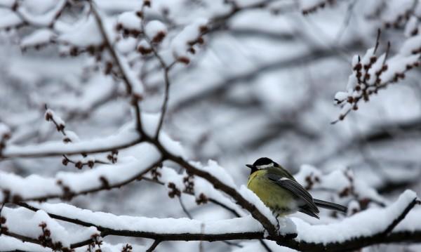 И утре: Сняг,  виелици, преспи, навявания...