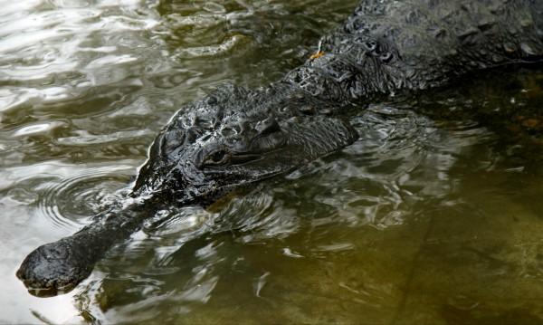 Не влизай в болницата! На вратата има крокодил