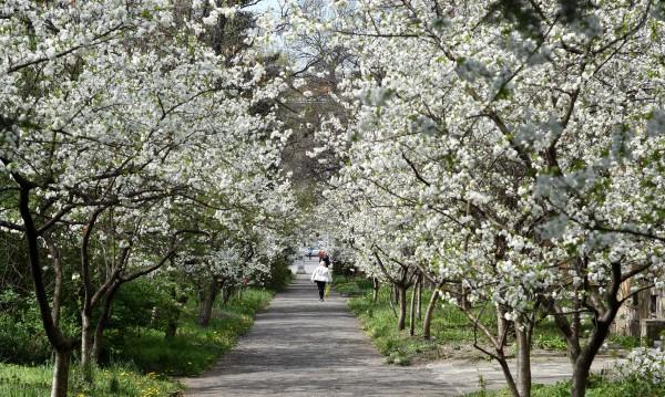 И все пак пролетта идва! Но преди това – още малко сняг