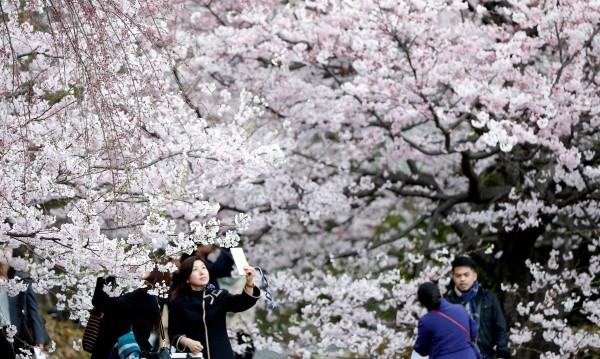 В Япония предпочитат роботите пред... чужденците