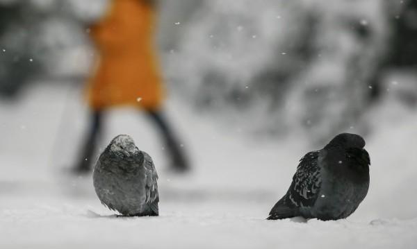 24 май 1991-ва – когато над София валя сняг. Климатът сега?