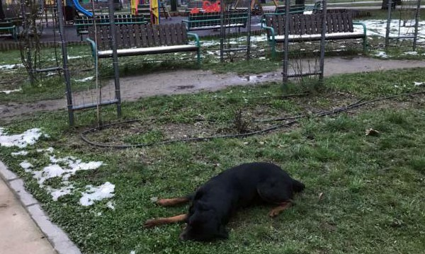 Приспаха ротвайлер, без каишка в парк, агресивен