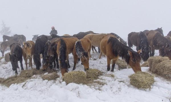 Зоополицаи, ветеринари и спасители при бедстващите коне