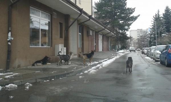 Могат ли институциите да се справят с уличните кучета?