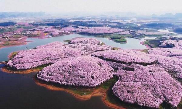 Изумителна красота! Пролетта в Китай