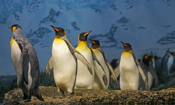 Първоаприлски от света: Фиданки за спагети, летящи пингвини и още...