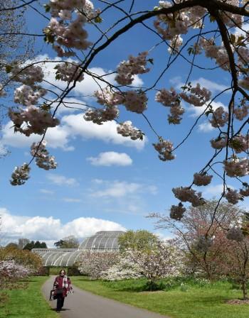 Пролетта дойде с мирис на... лечебна иглика