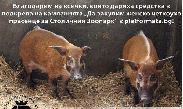 Столичният зоопарк събира дарения за... четкоухо прасе