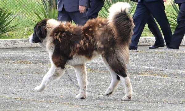Мъртвите кучета в Перник: Гледани за бой, уморени от глад!