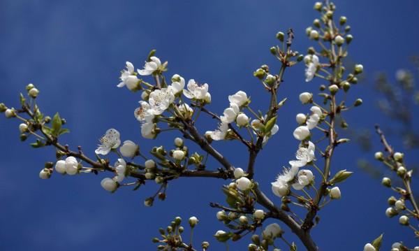 Април продължава като лято: До 29° в четвъртък