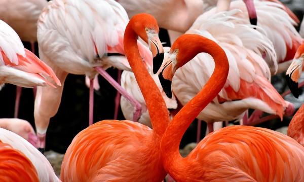Каква ще бъде седмицата в любовта за всяка зодия?