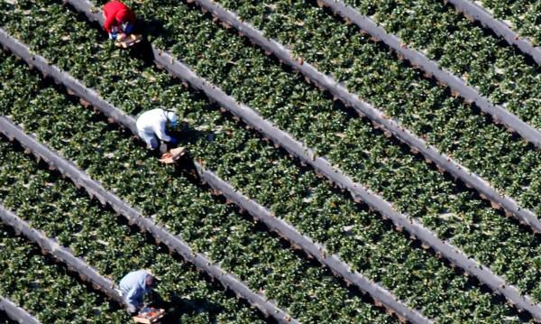 """Стотици хиляди българи работят """"на черно"""" в евроземеделието! Защо?"""