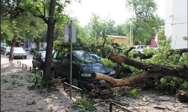 Дърво върху кола в Пловдив, по чудо няма ранени