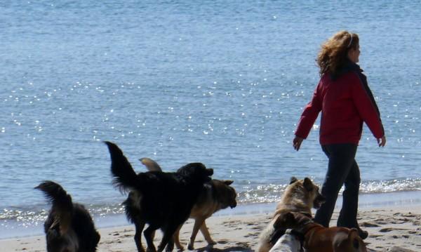 2500 бездомни псета на плажа, посрещат летовници!