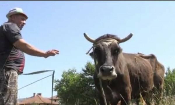 Кравата Пенка избяга в Сърбия! Върна се, но я чака... смърт!