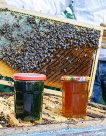 Безкрайните ползи от меда – ефикасен е и за астма