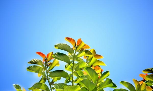 Слънчев и топъл петък. Температурите стигат до 34°С