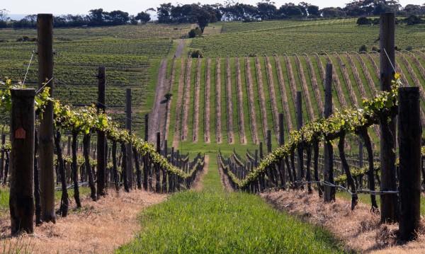 Лос Анджелис класира българско вино сред най-добрите в света