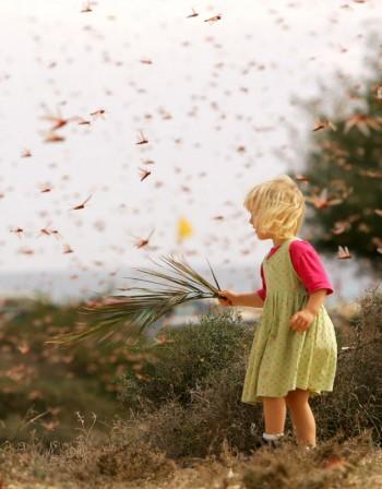 Детски алергии – помощ при ухапване от насекомо