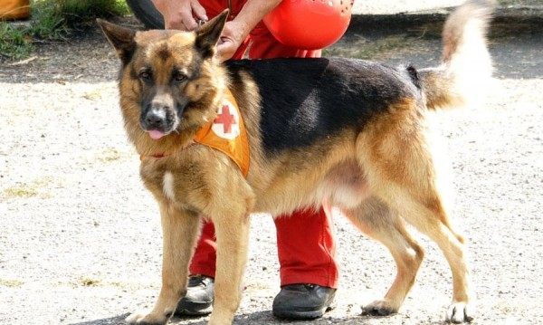 Спасители вадиха канадец от Боянската река