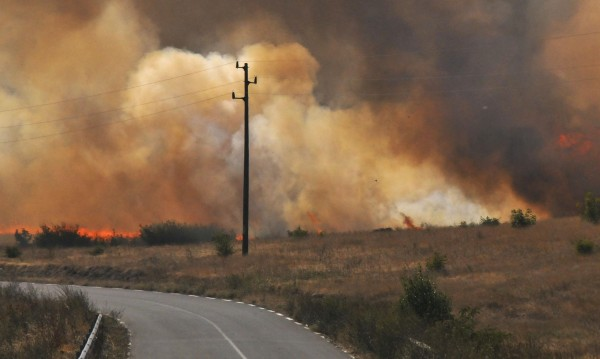 Над 380 декара с пшеница изгоряха край елховско село