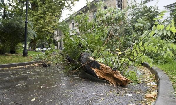 Дърво е паднало върху автомобил на семейство с дете