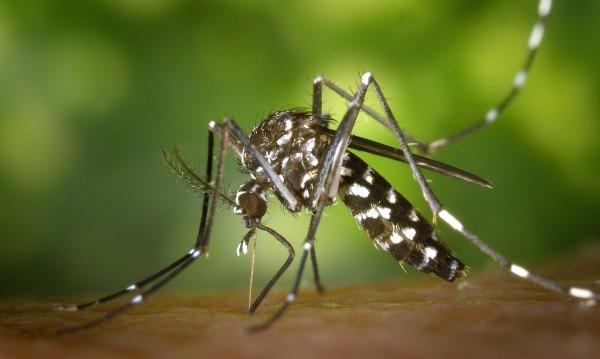 7 начина да облекчите ухапванията от комари