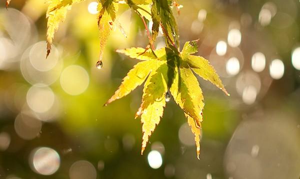 Прогнозата за понеделник: Слънце, но и слаб дъждец!