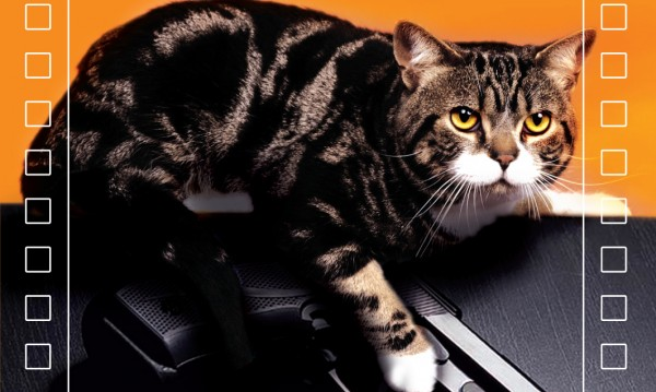 Злополуки и... котки бележат страшни престъпления