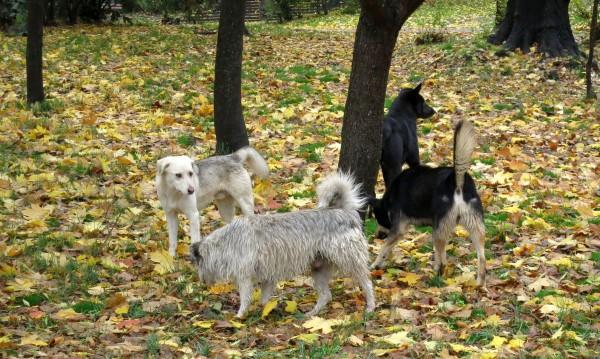 Родопчани vs. англичани: Не искат кучетата им, лаят и миришат