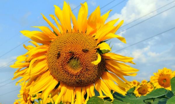 Слънчево и топло, с температури до 33 градуса