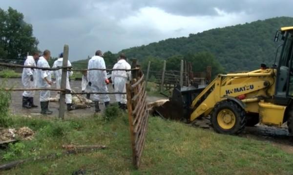 Обезщетенията за избитите овце – до 255 лв. на животно