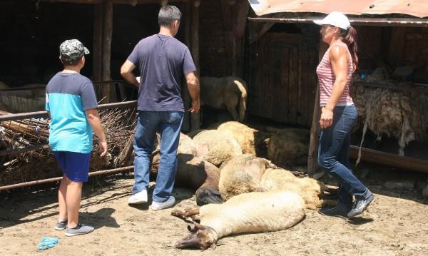Въпреки протестите: Евтаназирани са над 3000 животни