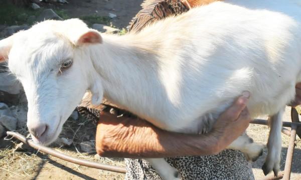 Йотова смъмри властта за животните: Наказателна акция!