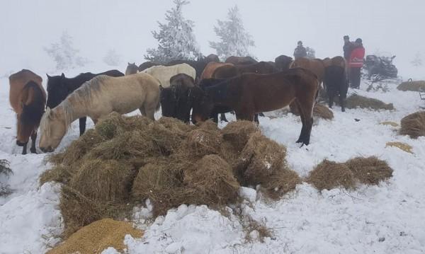 За конете от Осогово: Фермерът с 21 хил. лева глоби